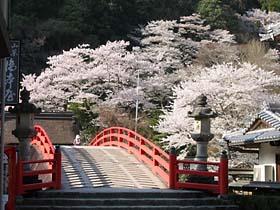室生寺の桜