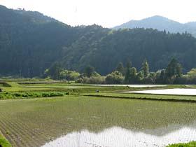 早くも田植えが始まっていた。赤松にて。