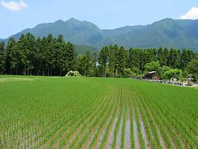 有間野付近の水田と局ヶ岳