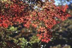 赤谷付近で見つけた紅葉