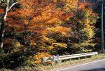 宗川沿いの紅葉