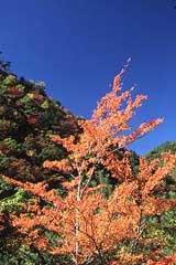 きれいな色合いの木