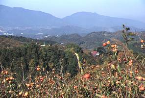 栃原より葛城山を望む