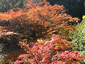 青田付近の紅葉