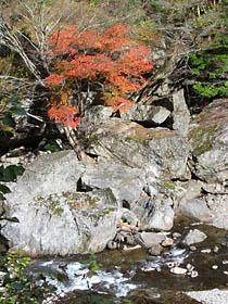 蓮川沿いの紅葉