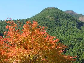 蓮中間橋付近の紅葉