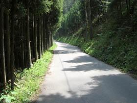 木漏れ日が心地よい県道赤滝五條線