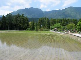 水田と局ヶ岳・有間野付近にて