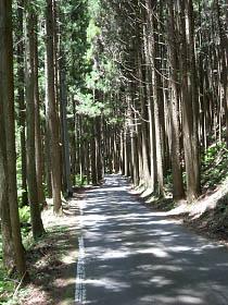 北山杉の美林を行く