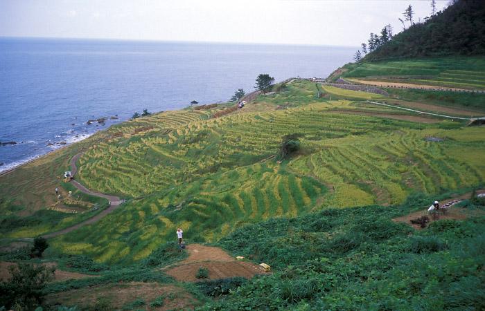 白米の千枚田