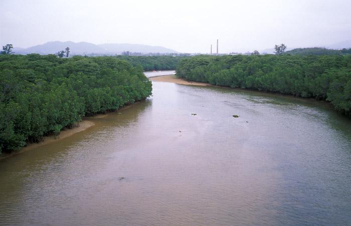 宮良川のマングローブ林