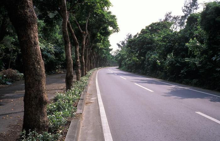 名蔵付近の並木道