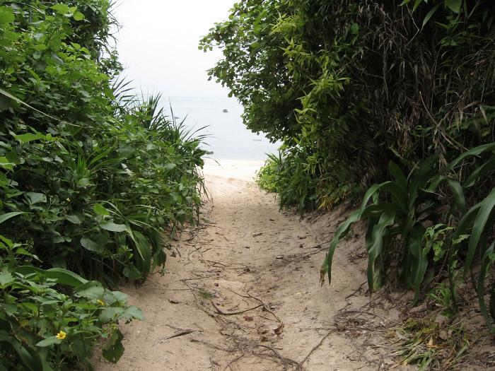 海へ抜ける道