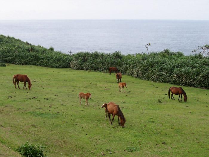 馬がのんびりと草を喰む南牧場